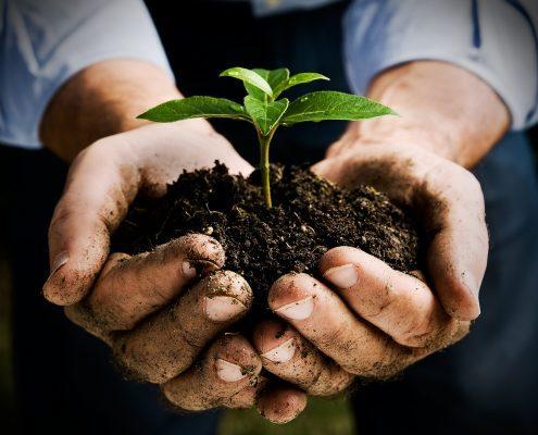Nurturing Seedling 495X400